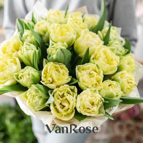 Букет из кремовых пионовидных тюльпанов