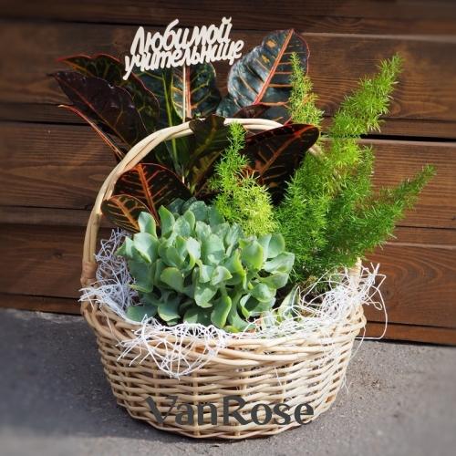 Композиция из комнатных растений № 8
