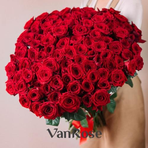 101 красная роза Рэд Наоми