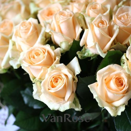 101 роза Пич Аваланш