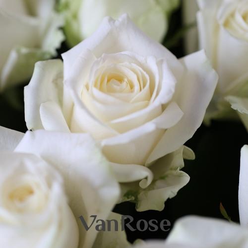 101 белая роза Аваланш