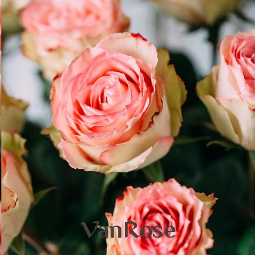 25 роз Эквадор Эсперанса