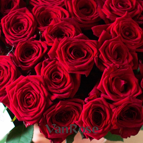 25 красных роз Рэд Наоми