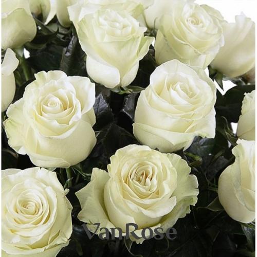 Роза Mondial оптом
