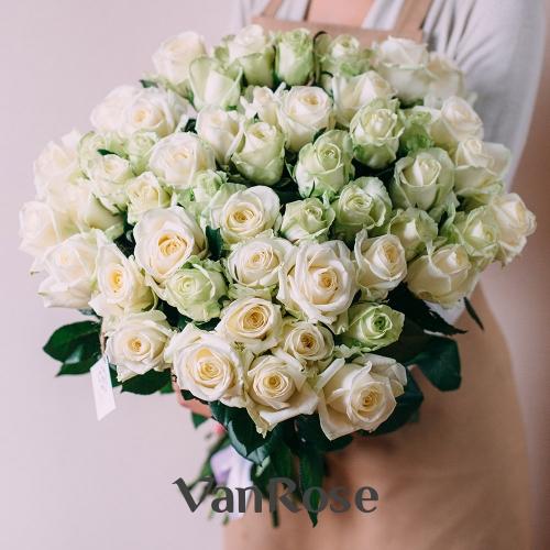 51 белая роза Аваланш