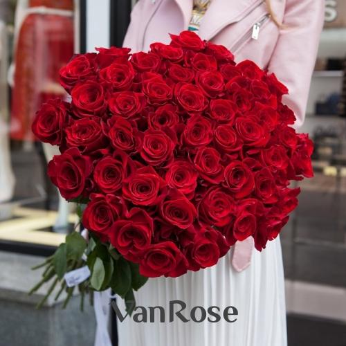 99 роз Фридом 60 см