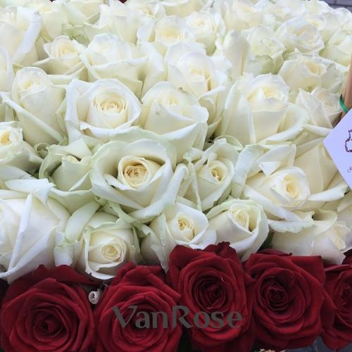 Композиция из 501 российской розы 60 см в корзине